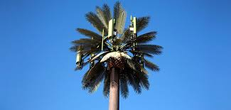 Cell Phone Towers In Palm Trees